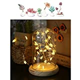 MUCHER {SECOND VERSION} Glass Dome Lamp USB Bamboo Lamp with Star Fairy Lights LED Beside Table Lamp Ideal for Bebroom, Living Room(Warm White)
